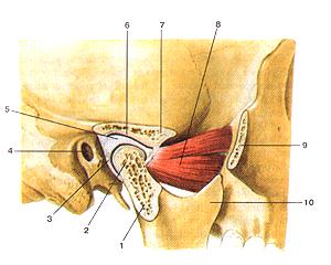 Височно нижне челюстной сустав человек артроскопия суставов в москве