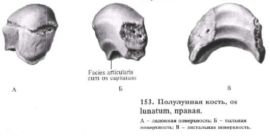 600 видов мышц человека  Boomleru