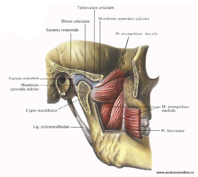 как от дисбактериоза болят ли суставы